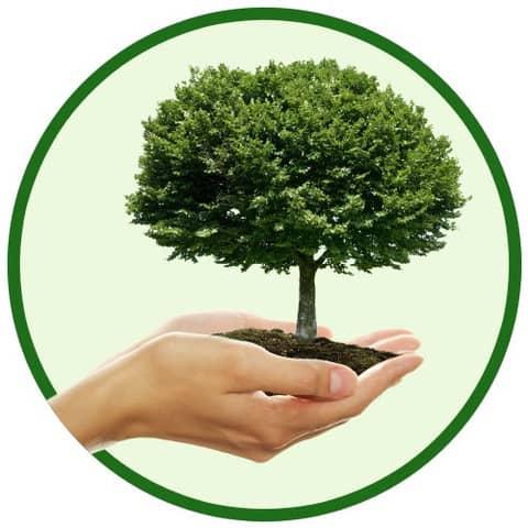 Ein neuer Baum Produktbild